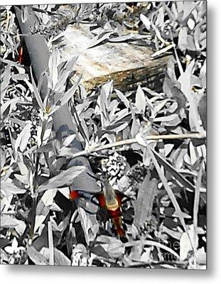 Hummingbird Bee Undone Metal Print by Yolanda Raker