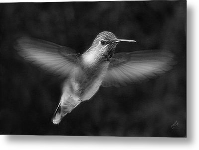 Hummingbird Metal Print by Ben and Raisa Gertsberg