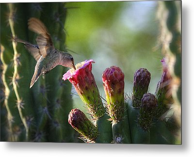 Hummingbird Breakfast Southwest Style  Metal Print by Saija  Lehtonen