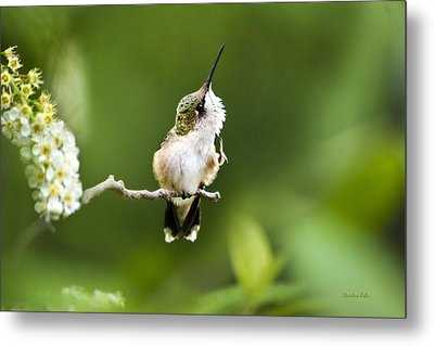 Metal Print featuring the photograph Hummingbird Flexibility by Christina Rollo