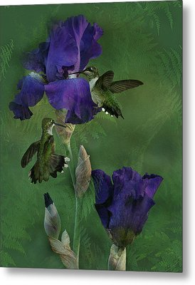 Hummingbird Gathering Metal Print