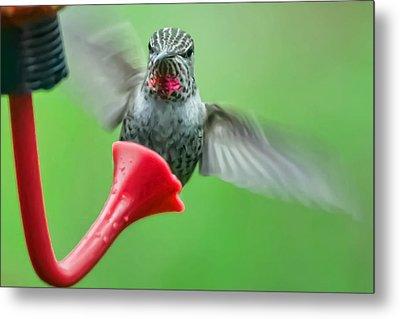 Hummingbird Houdini Metal Print