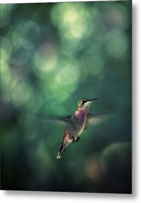 Hummingbird Hovering Metal Print by William Schmid