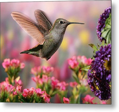 Hummingbird In Colorful Garden Metal Print by William Lee