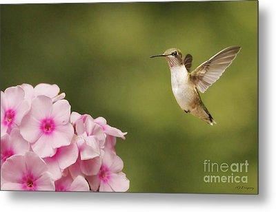 Hummingbird In Flight Metal Print by Nancy Dempsey