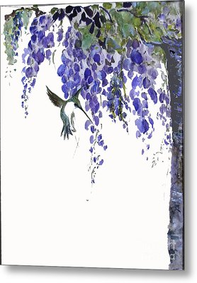 Hummingbird In Wisteria  Metal Print by Sibby S