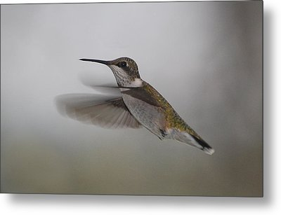 Metal Print featuring the photograph Hummingbird  by Leticia Latocki