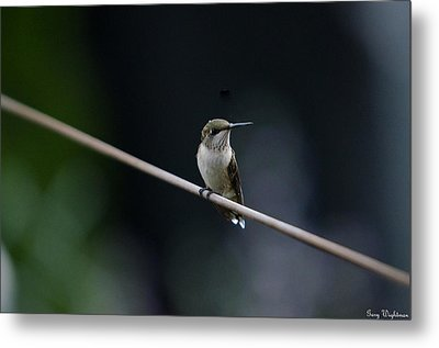 Hummingbird On A Wire Metal Print