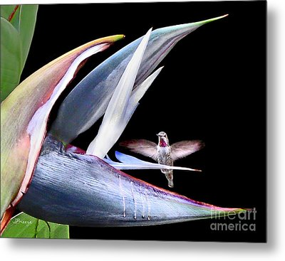 Metal Print featuring the photograph Hummingbird Paradise by Jennie Breeze