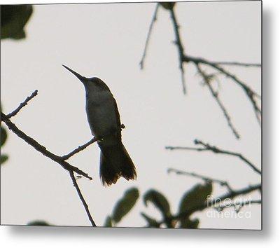 Hummingbird Silhouette 2 Metal Print by Joy Hardee