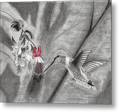 Hummingbird Metal Print by Susan Schmitz