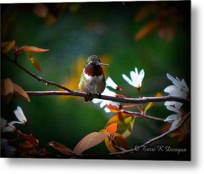 Hummingbird Metal Print by Terri K Designs
