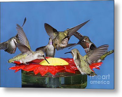 Hummingbirds At Feeder Metal Print by Anthony Mercieca
