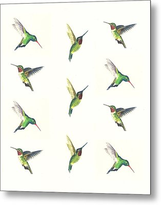 Hummingbirds Number 2 Metal Print by Michael Vigliotti