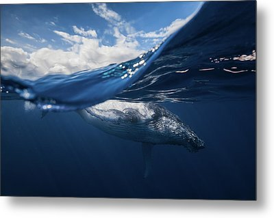 Humpback Whale And The Sky Metal Print by Barathieu Gabriel