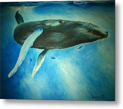 Humpback Whale Metal Print by Lucy D