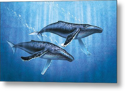 Humpback Whales Metal Print by JQ Licensing