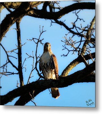 Metal Print featuring the photograph Hungry by Ally  White