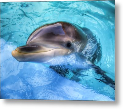 Metal Print featuring the photograph Hungry Dolphin by Tim Stanley