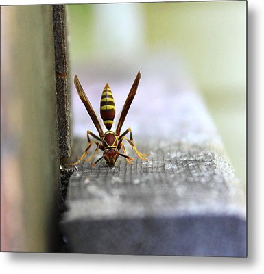 Hungry Hornet Metal Print