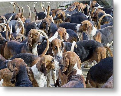 Hunter Hounds Dogs Background Metal Print by Aleksandr Volkov