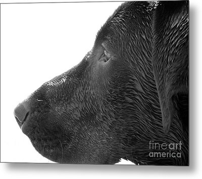 Hunting Dog Metal Print by Jennifer Kimberly