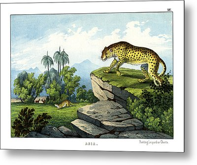 Hunting Leopard Metal Print by Splendid Art Prints