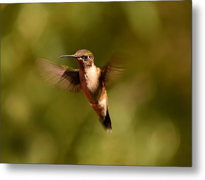 Hurry Up And Take My Picture Metal Print