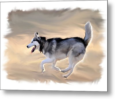 Siberian Husky At Play Metal Print