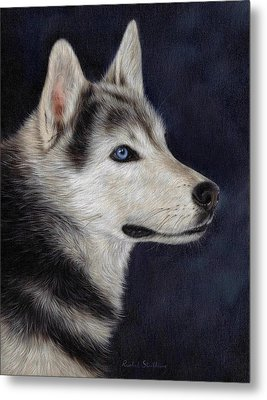 Husky Portrait Painting Metal Print by Rachel Stribbling