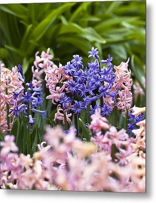 Hyacinth Garden Metal Print