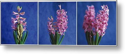Metal Print featuring the photograph Hyacinth by Lana Enderle