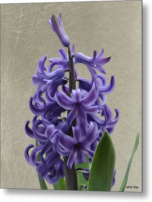 Hyacinth Purple Metal Print by Jeff Kolker