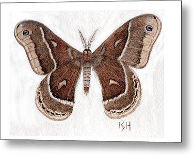 Hyalophora Cecropia/gloveri Hybrid Moth Metal Print by Inger Hutton