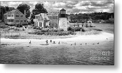 Hyannis Light Migrating Geese Bw Metal Print by Jack Torcello