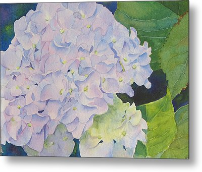 Hydrangea Metal Print by Judy Mercer