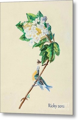 Hydrangea With Yellow Breasted  Vireo After Audubon Metal Print by Veronica Rickard