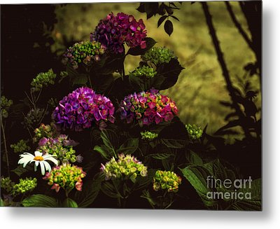 Hydrangeas In The Shade  Metal Print by Elaine Manley