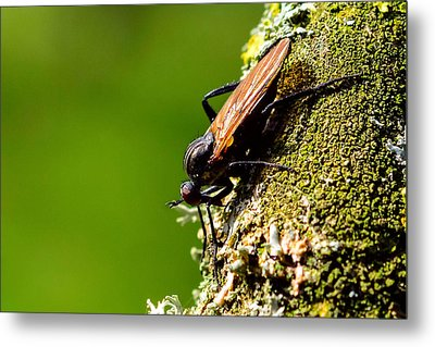 Hymenoptera Metal Print