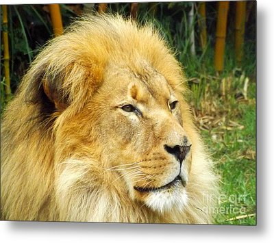 I Am King Metal Print by Clare Bevan