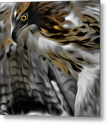 I Am Redtail Square Metal Print by Bill Wakeley