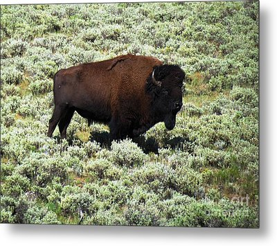 I Am The King Of This Meadow Metal Print by Ausra Huntington nee Paulauskaite