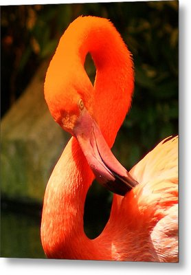 I Can Count To 8 - Flamingo Metal Print by DerekTXFactor Creative