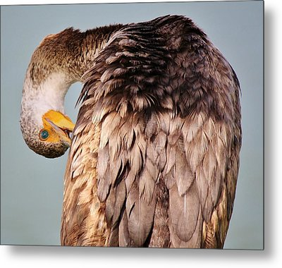 I Can See You Metal Print by Paulette Thomas