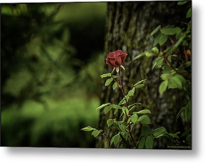 I Come To The Garden Alone Metal Print