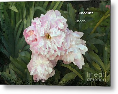 I Cry For You My Peonies Metal Print