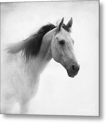I Dream Of Horses Metal Print
