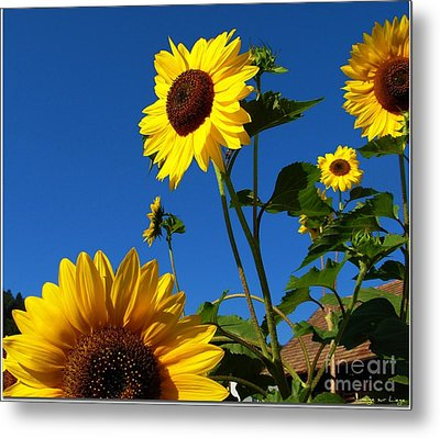 Metal Print featuring the photograph I Girasoli Dietro Casa Mia - Sunflowers In The Field Behind My House. by Mariana Costa Weldon