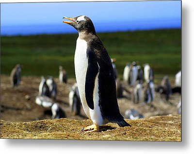 I Have A Dream - Penguin Metal Print by DerekTXFactor Creative