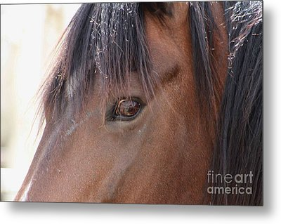 I Have My Eye On You Metal Print by Fiona Kennard
